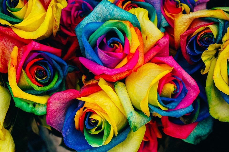 roses-828945_960_720